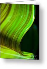 Lime Curl Greeting Card by Dana Kern