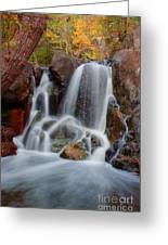 Lincoln Creek Greeting Card by Jamie Rabold