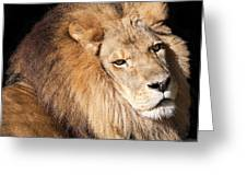 Lion Highlights Greeting Card by Kenneth Albin