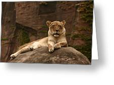 Lioness Greeting Card by B Rossitto