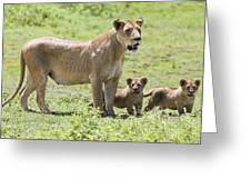 Lioness With Cubs Greeting Card by Carson Ganci