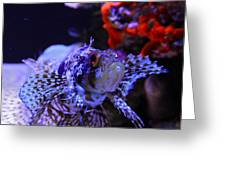 Lionfish Greeting Card by Karon Melillo DeVega