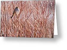 Little Sparrow Greeting Card by Sabrina L Ryan