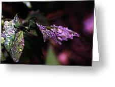 Little Water Drops Greeting Card by Jeff  Swan