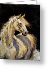 Little White Mare Greeting Card by Ellen Dreibelbis