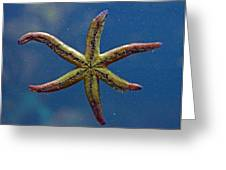 Live Starfish Greeting Card by Sandi OReilly