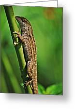 Lizard Greeting Card by Michael Peychich