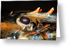 Lobster Eye Greeting Card by Ted Kinsman