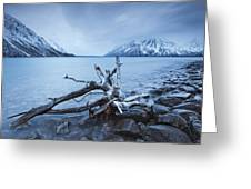 Log Along The Shores Of Kathleen Lake Greeting Card by Robert Postma