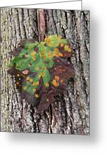 Lone Leaf-2 Greeting Card by Todd Sherlock