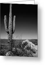 Lone Saguaro Greeting Card by Chad Dutson