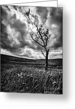 Lone Tree On The Ayrshire Moors Greeting Card by John Farnan