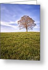 Lone Tree On The Hill Colour Greeting Card by John Farnan