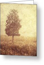 Lonely Tree. Trossachs National Park. Scotland Greeting Card by Jenny Rainbow