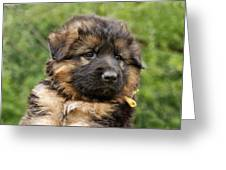 Long Coated Puppy Greeting Card by Sandy Keeton