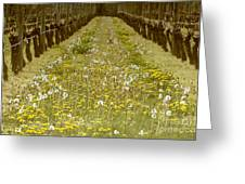 Long Island Vineyard Greeting Card by Anahi DeCanio