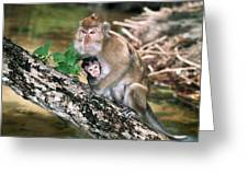 Long-tailed Macaque Mother And Baby Greeting Card by Georgette Douwma