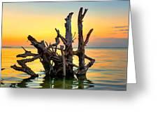 Longboat Key Tree Greeting Card by Jenny Ellen Photography