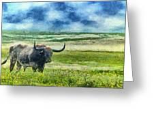 Longhorn Prarie Greeting Card by Jeff Kolker