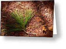 Longleaf Pine Needles Greeting Card by John Myers