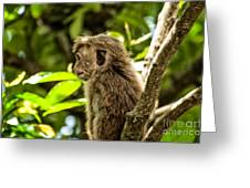Look To The Future Greeting Card by Venura Herath