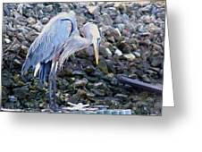 Looking For Lunch Greeting Card by Marilyn Holkham