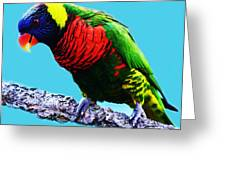 Lory Bird Greeting Card by Paulette Thomas