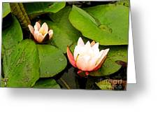 Lotus B Position Greeting Card by Charlie Spear