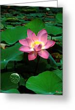 Lotus Flower And Capsule 24a Greeting Card by Gerry Gantt