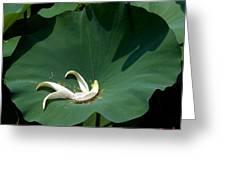 Lotus Leaf--castoff IIi Dl060 Greeting Card by Gerry Gantt