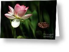 Lotus Opening To The Sun Greeting Card by Sabrina L Ryan