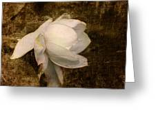 Love Letter VIII Cape Jasmine Gardenia Greeting Card by Jai Johnson