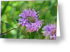 Lovely Lavender Greeting Card by Whispering Feather Gallery