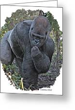 Lowland Silverback Gorilla Greeting Card by Larry Linton