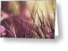 Luminis 02 - S11a Greeting Card by Variance Collections