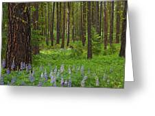 Lupine Carpet Greeting Card by Mike  Dawson