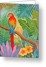 Macaw Greeting Card by Jennifer Baird