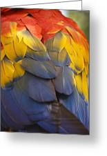 Macaw Parrot Plumes Greeting Card by Adam Romanowicz