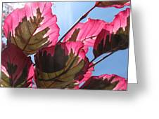 Macro Leaves Greeting Card by Sean Seal