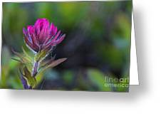 Magenta Paintbrush Greeting Card by Sean Griffin