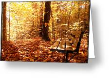 Magical Sunbeams On The Best Seat In The Forest Greeting Card by Chantal PhotoPix