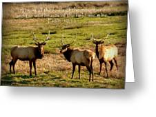 Magnificent Bull Elk Psalm 50 Greeting Card by Cindy Wright