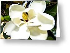 Magnolia Greeting Card by Clinton Lundberg