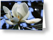 Magnolia In Blue Greeting Card by Carol Groenen
