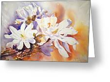Magnolia Stellata Greeting Card by Ruth Harris
