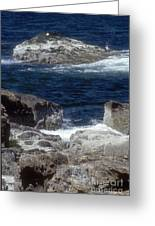 Maine Coast Surf Greeting Card by Darleen Stry