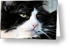 Maine Coon Face Greeting Card by Michelle Milano