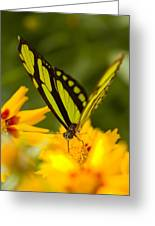 Malachite Butterfly On Flower Greeting Card by Craig Tuttle