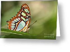 Malachite Butterfly Greeting Card by Sabrina L Ryan