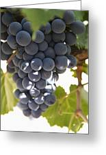 Malbec Grapes On The Vine Greeting Card by Peter Langer